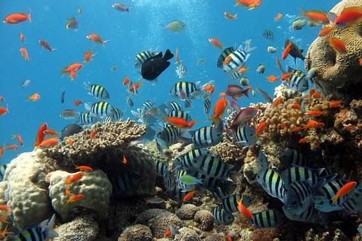 Flatscreen aquarium