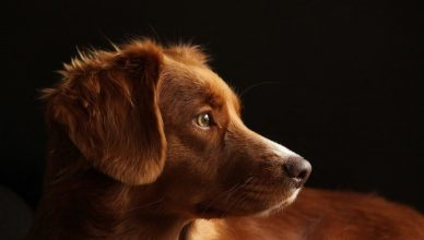 Een hond als huisdier