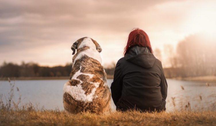Mentale gezondheid hond